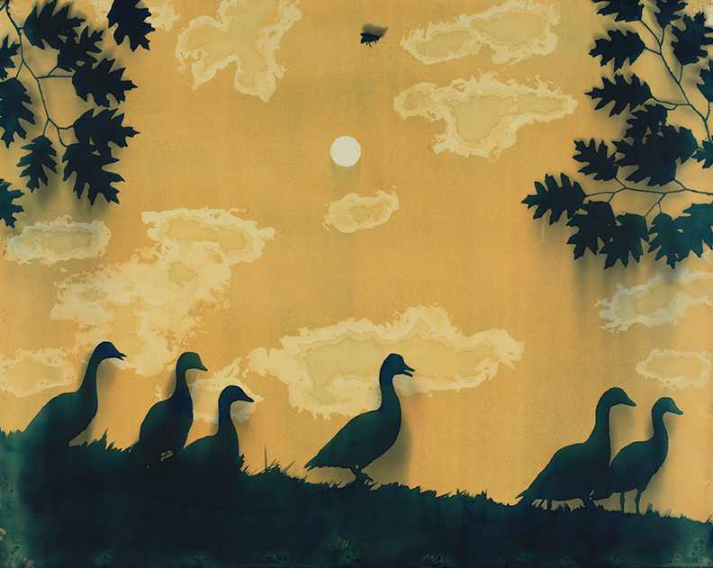 summer ducks - low res